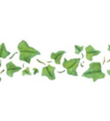 Wandschablone Efeuranke